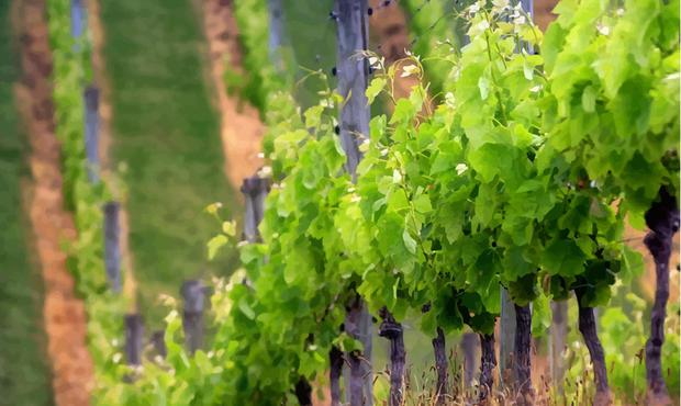 Quel Est Le Prix D Un Hectare De Vigne En France