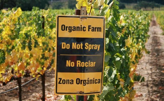 Organic vineyard 2