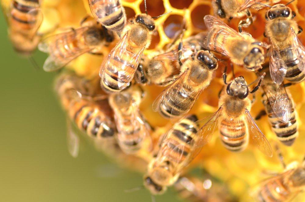 sans pesticides les abeilles sont en pleine forme. Black Bedroom Furniture Sets. Home Design Ideas