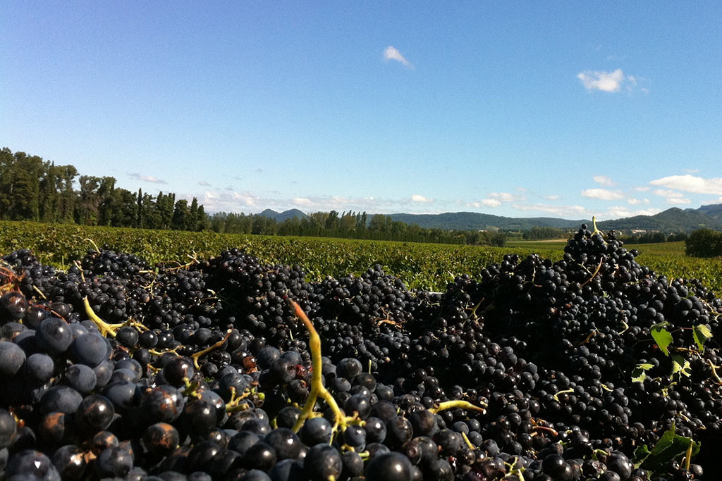 Wine making in France