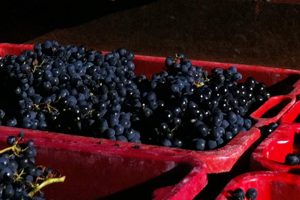 Wine making tradition