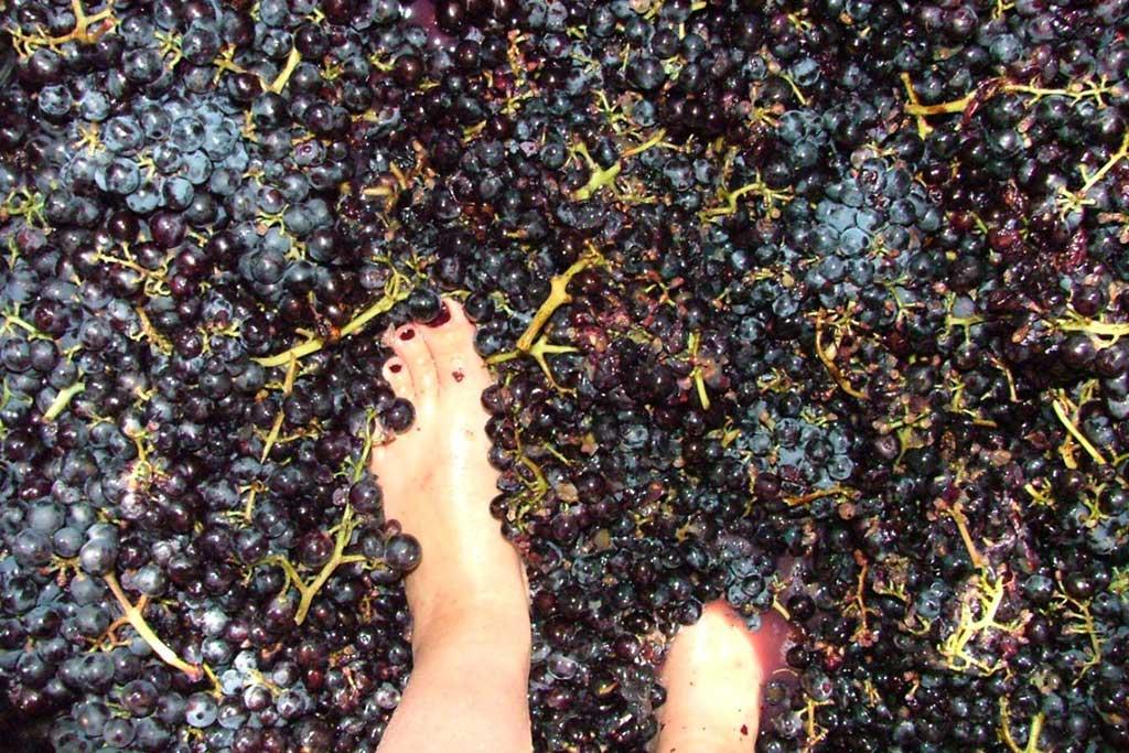 Ann Vermeersch and Dirk Vermeersch making wine in suze la rousse